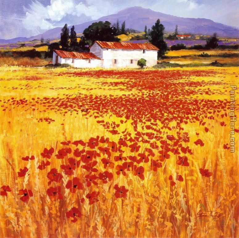 Steve Thoms Poppies