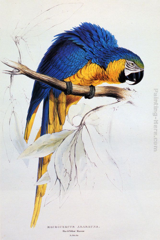Gold For Sale >> Edward Lear Blue And Yellow Macaw painting anysize 50% off